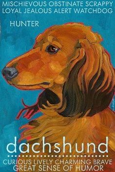 characteristics of a #dachshund nobel and sure of their place in their home, on the bed...
