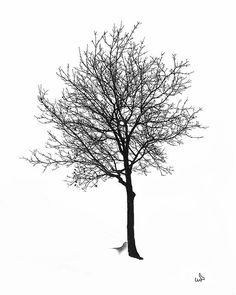 Bare Winter Tree by Michael Flood Tree Sketches, Card Sketches, Bare Tree, I Love Winter, Tree Leaves, Winter Trees, Tree Print, Interactive Design, Coups