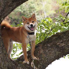 木登りしてみました。