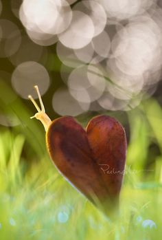 So in love by Lee Peiling - Photo 75434297 - Nature Pictures, Cool Pictures, Heart In Nature, Cute Animal Memes, Bokeh Photography, Out Of Focus, Happy Paintings, Foto Art, Black And White Pictures