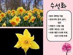 봄 활동자료 봄에 피는 꽃 PPT : 네이버 블로그 Blog, Korea, Blogging, Korean