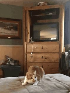 Ninja cat! Cat GIF Central. In case you were looking for a Tumblr of cat GIFs.