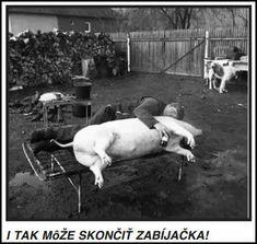 Alkohol - Najnovšie Zábavné obrázky | REHOT.sk Horses, Animals, Alcohol, Animales, Animaux, Animal, Animais, Horse