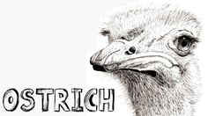 How to draw an Ostrich in Pen and Ink - Online Art Lessons