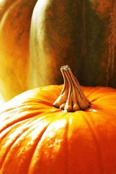 Préparer vos citrouilles ! C'est Halloween demain. Mouahahaha Orange