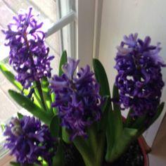Favorite spring flowers in February!