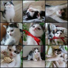 Žavūs 2 mėn. kačiukai — Alio.lt