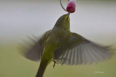 (5) Photo taken with NIKON D7000 - Nature - YouPic