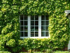 Casement windows close-up 2. http://www.finesse-windows.co.uk/casement_windows.php