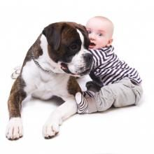 How To Prepare Your Dog For A New Baby