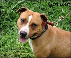Gordo (Mayo 2013) Cariñoso, mimoso, buenísimo y obediente. Le encanta salir de paseo. Sociable con otros perros. Para su adopción necesita licencia PPP.