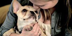 Tudo sobre a raça Buldogue Francês - Blog do Cachorro