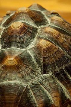 JABUTI-CASCO-tortoise shell