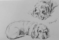 Dachshund VINTAGE MOUNTED 1936 Oonagh Wire haired by Hollysprints