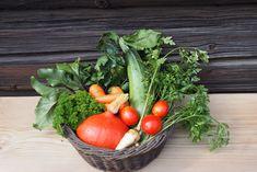 Založte si svůj první zeleninový záhon. Tady je návod krok za krokem – Pěstuj zeleninu