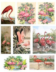 Pink Flamingos Digital Collage Sheet - See Storefront for Monthly Coupon Code on Etsy, 2,72€