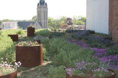 Beautiful rooftop garden with round corten steel containers. VCU Greenroof Pollack Building | scottydesignsgreen.com
