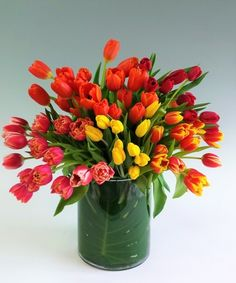 "Celebrate 70 Tulips-Celebrate any Occasion with this fresh colorful mix of tulips. A Stadium Flowers Spring Tradition for 70 years.  this Premium design Features 70 stems of bright tulips clustered together in our signature leaf wrapped 10"" high hand blown cylinder vase. Tulips are one of the only flowers that continues to grow after being cut. The length of the stem can grow inches in a few days and the flower opens and expands doubling in size. #SpringFlowers #StadiumFlowers…"