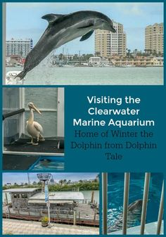 Our experience at the Clearwater Marine Aquarium in Clearwater, Florida, home to movie stars Winter and Hope from the Dolphin Tale movies. Visit Florida, Florida Vacation, Florida Travel, Vacation Spots, Travel Usa, Vacation Ideas, Travel Tips, Vacation Rentals, Budget Travel
