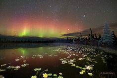 paisajes aurora boreal - Buscar con Google