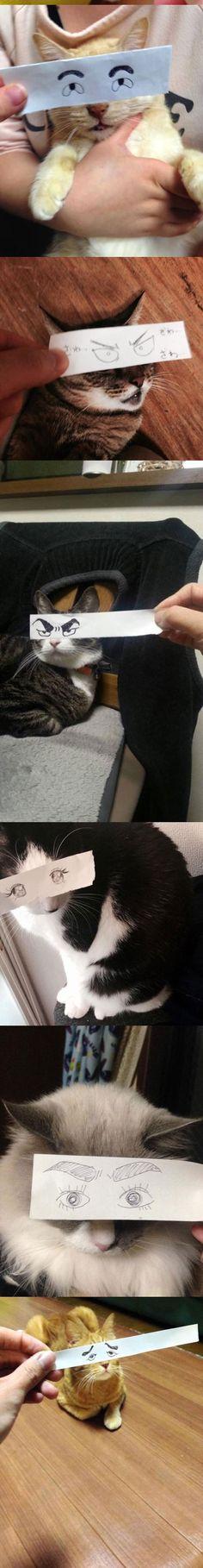 I reallllllllllllllllly dislike them, but eh......... can't say I hate em  #Cats