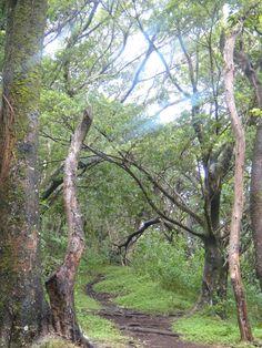 Makiki Trail, Oahu