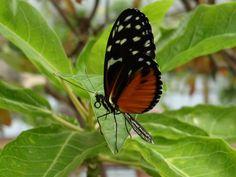 Blijdorp Amazonica