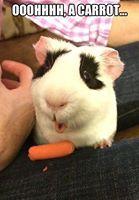 AWWW SNAP! he got a carrot bigger then his arm!