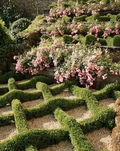 Lovely piecrust lattice effect with layered roses and topiary boxwood beyond.