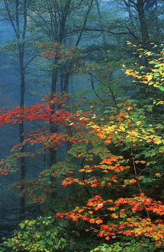 """Trees and Autumn mist"" (Smoky Mountains) by Chuck Wickham on fineartamerica"