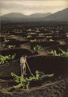 """johnny-recordar-me: """"cráteres hechos por el hombre, sacar con una cuchara de cenizas de lava granulares, vides refugio.  - National Geographic de 1969 """""""