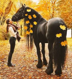 Unique and creative Gorgeous black horse pictures , Pretty Animals, Cute Little Animals, Animals Beautiful, Horse Mane, Friesian Horse, Appaloosa Horses, Baby Animals Pictures, Cute Animal Pictures, Cute Horses