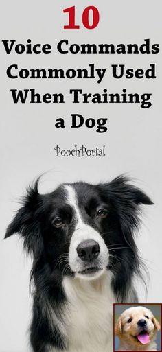 Dog Obedience Training Pet Training - Discover the 10 most commonly used voice commands used when training a dog. This article help us to teach our dogs to bite just exactly the things that he needs to bite Dog Commands Training, Dog Training Books, Basic Dog Training, Puppy Training Tips, Training Dogs, Potty Training, Training Online, Clicker Training Puppy, Doberman Training