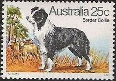 ◇Austria  1980    Border Collie