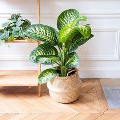 Houseplants, Tropical, House Styles, Inspiration, Bedroom, Home Decor, Garden, Home, Plants
