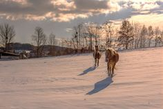 Horses at the country by ChristianThür Photography on Creative Market Winter Time, Christian, Horses, Country, Photography, Outdoor, Creative, Animales, Outdoors