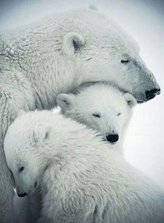 "Touching... ""Don't worry my children, there is no way the ice will keep melting away."" (sigh...I hope and pray...)"