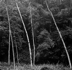The Angle of Trees My Father, Trees, Inspiration, Photography, Biblical Inspiration, Home Decor Trees, Wood, Inhalation, Plant