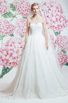 Photo Maleya Wedding Photographer l $$$ Price on the website