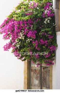 Beeld - bougainvillea, bloemen, buiten, woonhuis, patmos, dodecanese
