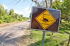 Howler Monkey (baboon) crossing sign in Belize