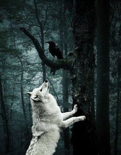 The Wolf and the Raven ~ Game of Thrones