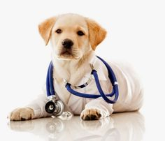 Dog Health Problem - What Causes Them and How Can You Prevent Them ~ Rosy and Rocky Pet Supply