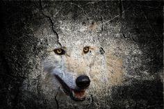 Grey wolf in stone wildlife art...
