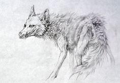 White Coyote by `PearlEden on deviantART