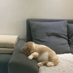 This cat has an interesting dream
