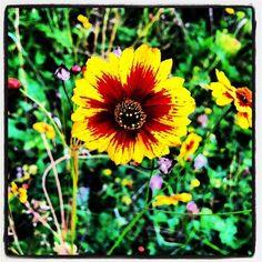 'flower' von Matthias Hennig bei artflakes.com als Poster oder Kunstdruck $16.63