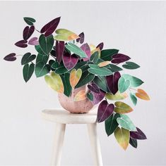 Comment your thoughts below Posted Black Gold Philodendron! Comment your thoughts below Opening Hours: Wed-Fri Sat Sun-Tue Closed Photo: __ Potted Plants, Garden Plants, Indoor Plants, Plantas Indoor, Paper Plants, Decoration Plante, Plants Are Friends, Plantation, Plant Decor