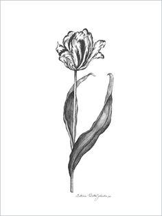 parrot tulip Tulip Tattoo, Flower Tattoos, Parrot Tulips, Botanical Prints, Ink, Google Search, Flowers, Tattoos, Tattoos Of Flowers