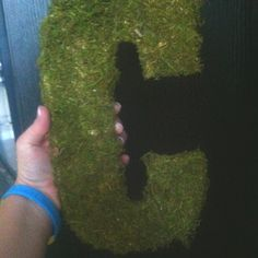 "Moss ""C""s for the entrance doors."